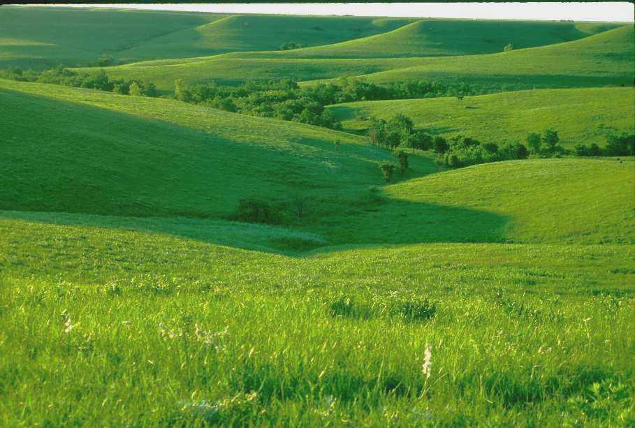 Konza Prairie Site Des...